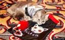 3-algonquin-cat-fashion-show-2014-phantom_650