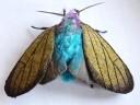 yumi-okita-moths-12