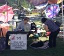 zucchini-festival-dog1