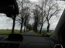 trees-on-the-side-of-the-road