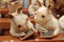 Rabbits' Village School, Circa 1888