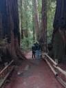 muir-wood10
