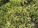 moss-fields10