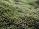 moss-fields11