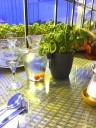 tomato-greenhouse4
